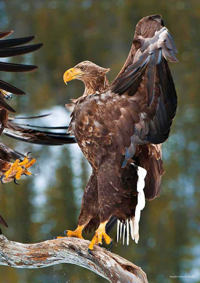 deutsche vögeln